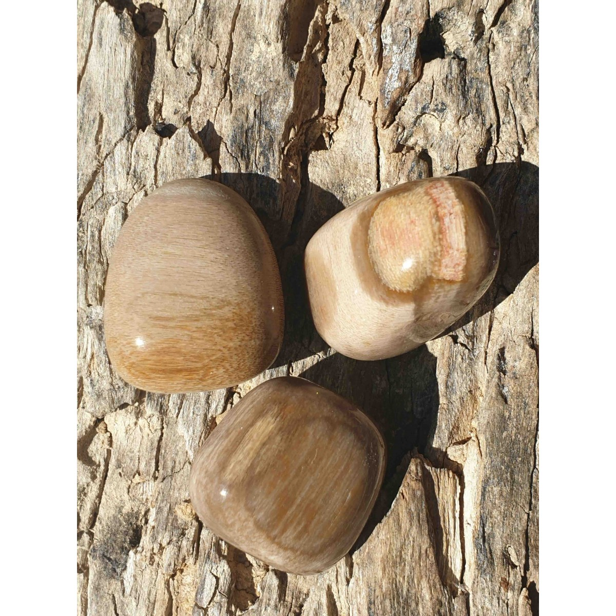 Bois fossile (pierre roulée)